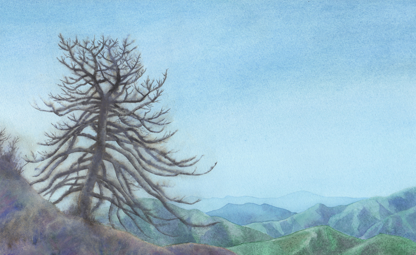 Watercolor of a burnt tree, inspired by a trip to the Angeles National Forest