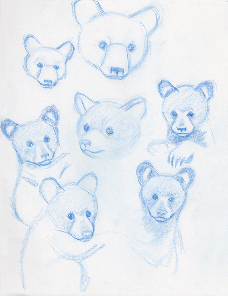 Bear cub sketches
